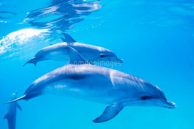 青い海のイルカの写真素材 [FYI01505198]