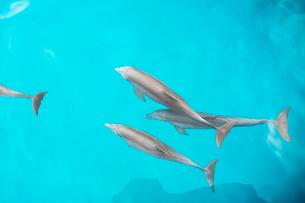 船上から見るイルカの写真素材 [FYI01505281]