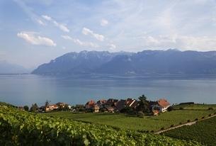 Lavaux vineyard terrassesの写真素材 [FYI01505450]