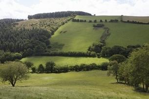 green hillsの写真素材 [FYI01505463]