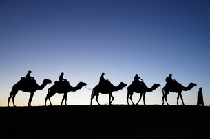 Sahara desert, tourists, camel safari, evening skyの写真素材 [FYI01505499]