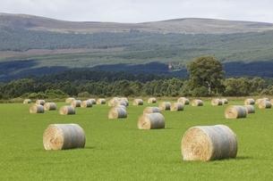 hay rollsの写真素材 [FYI01505658]