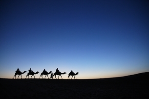 Sahara desert, tourists, camel safari, evening skyの写真素材 [FYI01505723]