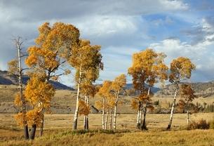 autumn colorsの写真素材 [FYI01505887]