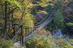 Double Vine Bridgeの写真素材 [FYI01505997]