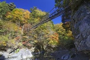 Double Vine Bridgeの写真素材 [FYI01506041]