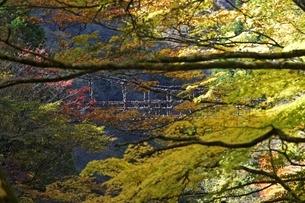 Double Vine Bridgeの写真素材 [FYI01506110]