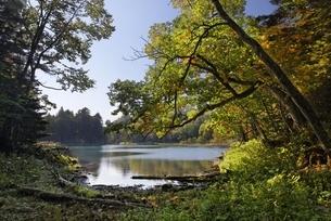 Lake Taro-ko, autumn colorsの写真素材 [FYI01506511]