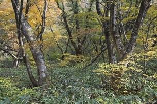 autumn colorsの写真素材 [FYI01506529]