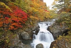 Sankai-daki, waterfalls, autumn colorsの写真素材 [FYI01506538]