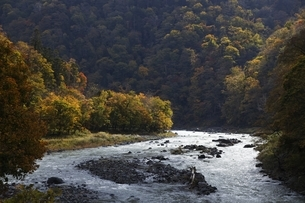 gorge, river, forest, autumn colorsの写真素材 [FYI01506583]