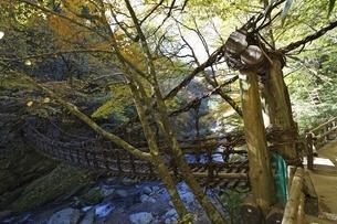 Double Vine Bridgeの写真素材 [FYI01506639]