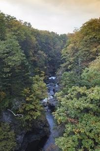 autumn colors, streamの写真素材 [FYI01506669]