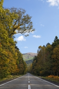 road, Onnetoh Line, autumn colorsの写真素材 [FYI01506732]