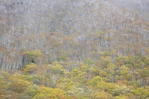 Shikaoi-cho, forest, trees, autumn colorsの写真素材 [FYI01506799]