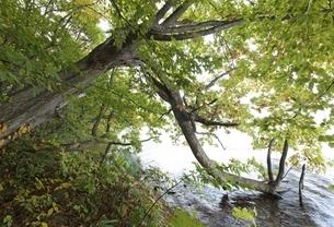 Lake Toya, shore, tree, autumn colorsの写真素材 [FYI01506802]