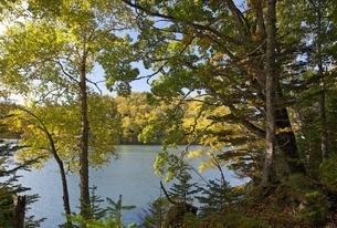 Lake Akan-ko, autumn colorsの写真素材 [FYI01506821]