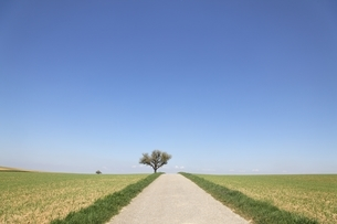 pear tree, fields, road, near Heilbronn, Baden-Wuerttembergの写真素材 [FYI01506916]