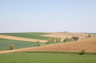 fields, near Heilbronn, Baden-Wuerttemberg, Germanyの写真素材 [FYI01506918]