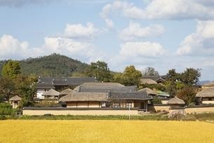 rice fields, houses, near Hahoe Village, Gyeongsangbuk-doの写真素材 [FYI01506937]