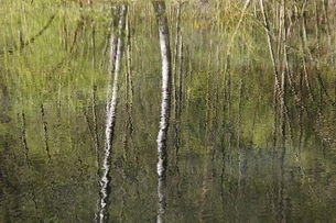 pond, reflexions, trees, Baden-Wuerttemberg, Germanyの写真素材 [FYI01507098]