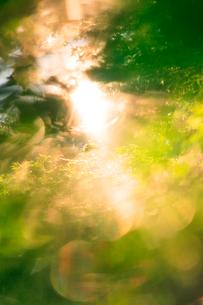 朝のモミジの新緑と木もれ日の写真素材 [FYI01507163]