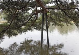 Kanjizaio-in Ato, pond, pine treeの写真素材 [FYI01507170]