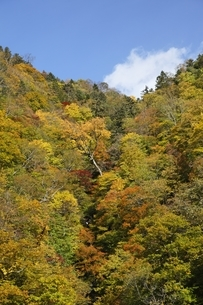 forest, autumn colorsの写真素材 [FYI01507190]