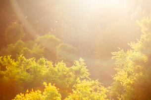 朝のモミジの新緑と木もれ日の写真素材 [FYI01507246]