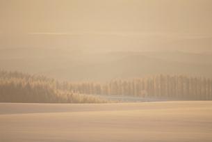 朝の雪原と霧氷の写真素材 [FYI01507289]