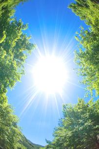 モミジの新緑と太陽の写真素材 [FYI01507290]
