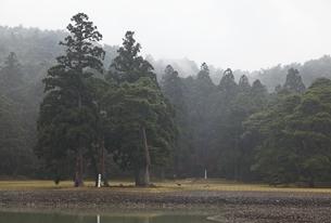 Motsu-ji Temple, pond, trees, forestの写真素材 [FYI01507375]