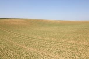 fields, near Heilbronn, Baden-Wuerttemberg, Germanyの写真素材 [FYI01507403]