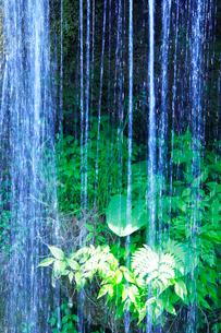 滝状の岩清水と若葉の写真素材 [FYI01507407]