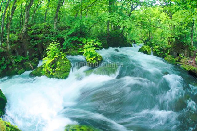 清流と新緑の写真素材 [FYI01507429]