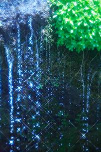 輝く滝状の岩清水と若葉の写真素材 [FYI01507435]