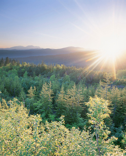 朝日と大雪山と新緑の樹林の写真素材 [FYI01507475]
