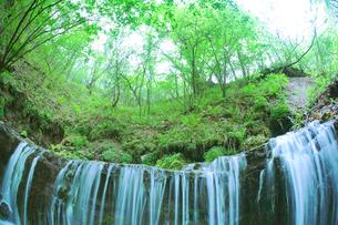 滝状の岩清水と新緑の樹林の写真素材 [FYI01507484]