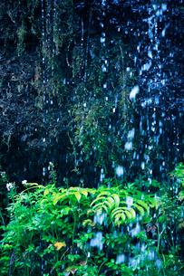 滝状の岩清水の写真素材 [FYI01507541]