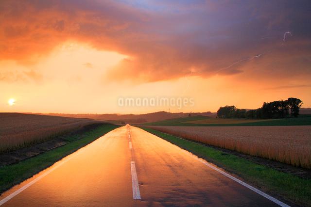 雨に濡れた道路と小麦畑の写真素材 [FYI01507569]