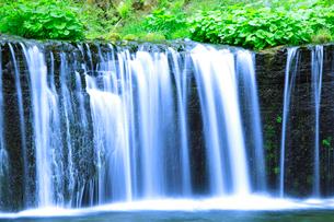 滝状の岩清水の写真素材 [FYI01507580]
