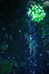 輝く滝状の岩清水と若葉の写真素材 [FYI01507583]