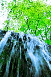 滝状の岩清水と新緑の樹林の写真素材 [FYI01507603]
