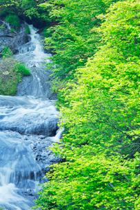 ツツジと竜頭滝の写真素材 [FYI01507646]