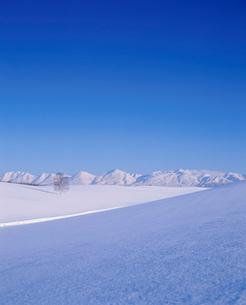 雪原と一本の木と十勝連峰の夕景の写真素材 [FYI01507656]