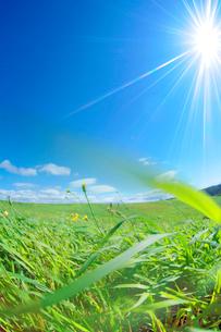 牧草と太陽の写真素材 [FYI01507678]