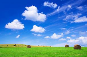 黒毛和牛と牧草ロールの写真素材 [FYI01507735]