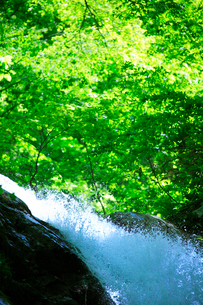 滝の水しぶきと新緑の写真素材 [FYI01507817]