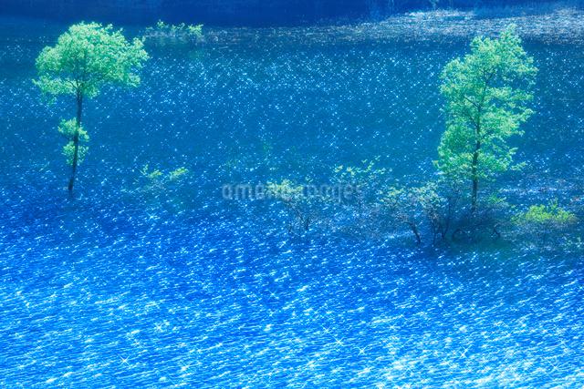 新緑の木立と宝仙湖の写真素材 [FYI01507908]