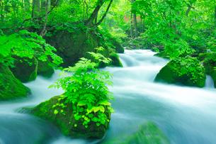 新緑と清流の写真素材 [FYI01507938]